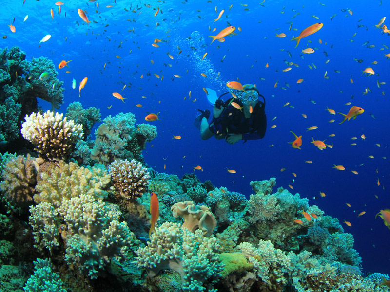 Diving-in-Cozumel-Coral-Package