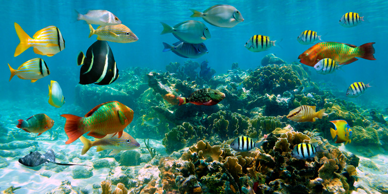 coral-reef-770