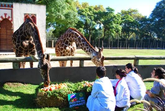 zoo-buenos-aires-girafas